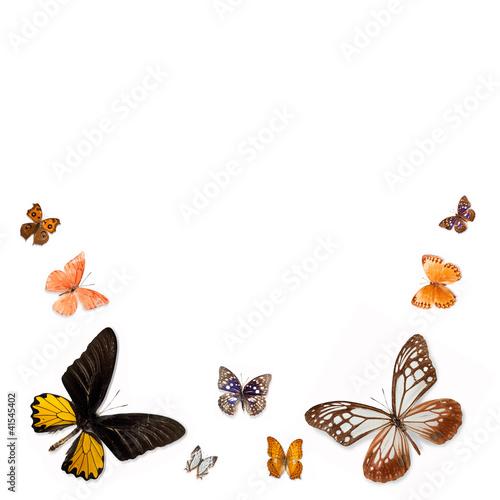 Fotobehang Vlinder A variety of butterflies