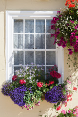 Window Box and Hanging-Basket