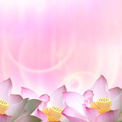 Beautiful Lotus for adv or others purpose use