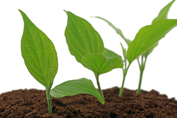 pflanzen in erde