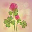 Pink Clover / Floral fresh background