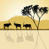 African landscape flora and fauna in sunset time with antelopes. poster