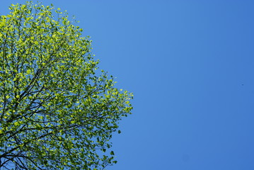 Green tree and blue sky