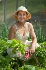 Smiling woman picking radish