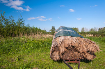 Harvested reeds on a trailer