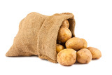 Raw potatoes in burlap sack