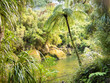 Lush green rainforest along Pororai River, NZ