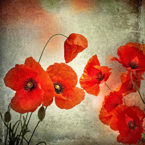 kwiaty-makow-w-stylizacji-retro