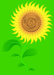 Sunflower on green. Vector.