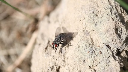 fly on stone