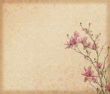 magnolia flower with Old antique vintage paper