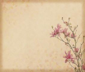 magnolia flower with Old antique vintage paper background