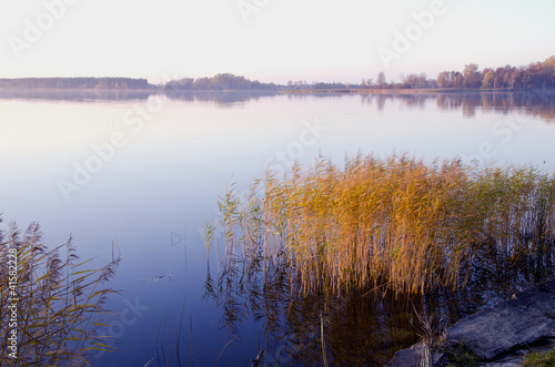 Background of lake evening landscape. Bulrush grow