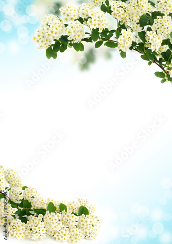 Background with beautiful white flower