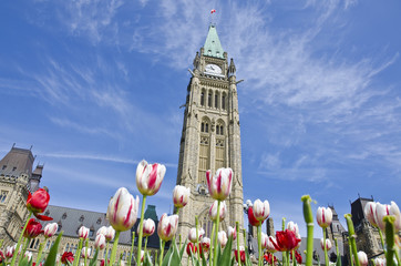 Parliament Hill Ottawa with Tulips