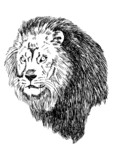 Sketch illustration of lion head - 41595865