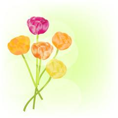 Ranunculus vector background
