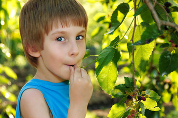 little boy eating mulberry