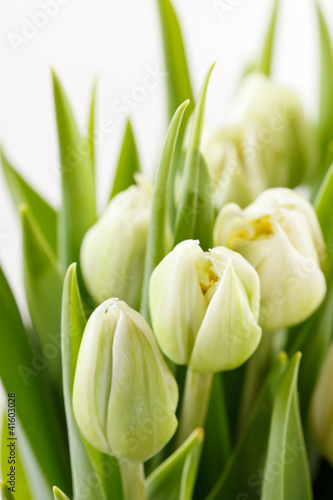 nice tulips - 41603028