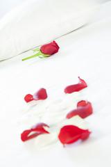 Rosa rossa sul letto
