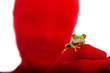 Red masked person holding a red eyed tree frog