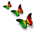 Three  Senegal flag butterflies, isolated on white