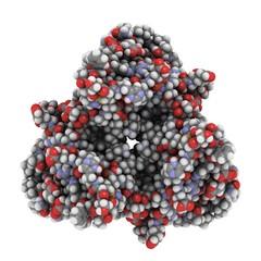 Human Leptin hormone molecule