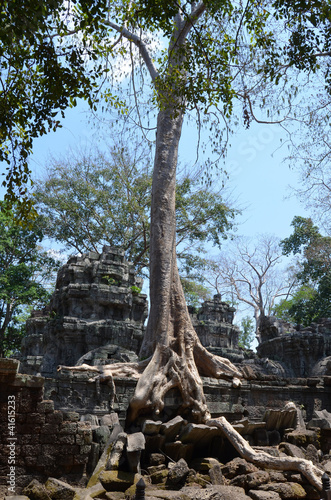 korzenie-najezdzajace-swiatynie-ta-prohm-angkor-kambodza