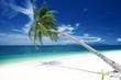 Fototapeten,kreuzfahrt,bellen,küste,palme