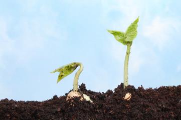 Two seedlings against a sky
