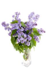 lilac flower in vase