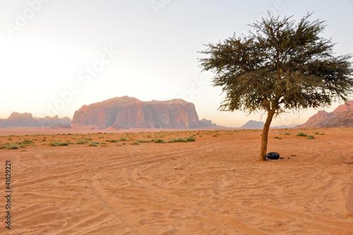 Staande foto Afrika Lonely tree in Wadi Rum (Jordan)