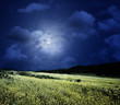 midnight on the meadow, abstract natural backgrounds