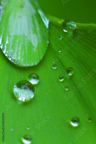 水滴 © takanobu
