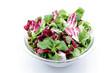 insalata mista su sfondo bianco