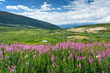 Wild Flowers Summer Mountain Landscape