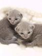 猫ベッドに入った二匹の子猫