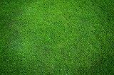 Green grass texture background - Fine Art prints