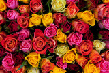 Flowers. Colorful roses background - 41650498