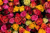 Fototapete Hintergrund - Colorful - Blume