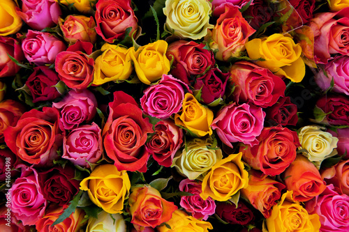 Poster Flowers. Colorful roses background