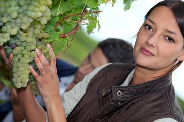 Woman picking grapes
