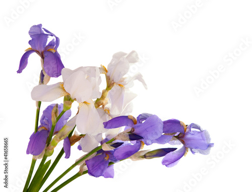 iris bouquet isolated