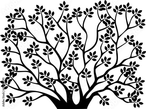 Tree silhouette - 41665890