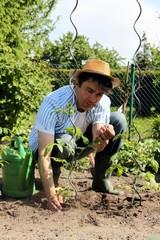 Hobbygärtner mit Strohhut pflanzt Gemüse im Beet