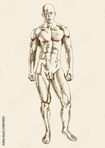 Sketch illustration of a muscular male figure