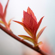 close up shoot of red spring leafs