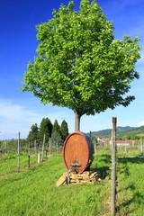 Weinfass im Weinberg