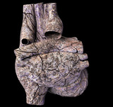 Model of ruined human heart
