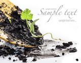 Transplanting plants on a white background (with sample text) poster